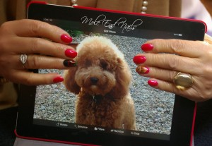 Nutty Cockerpoo on Ipad with Susie holding it showing her accent nails